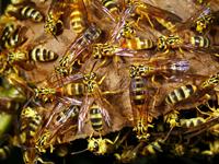 Bee & Wasp Control in Dallas