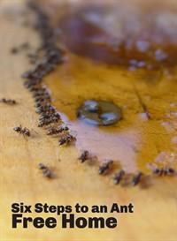 ant-eat_200x273