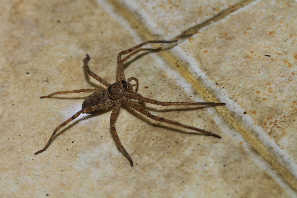 Image result for images of Pest Control For Spiders