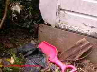 Home Needs Termite Exterminator
