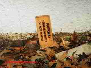 Termite Traps DFW