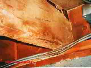 Termites & Carpenter Ant Control