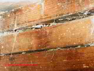 Termite Control DFW