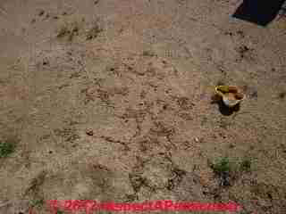 Termite Pest Control Needed