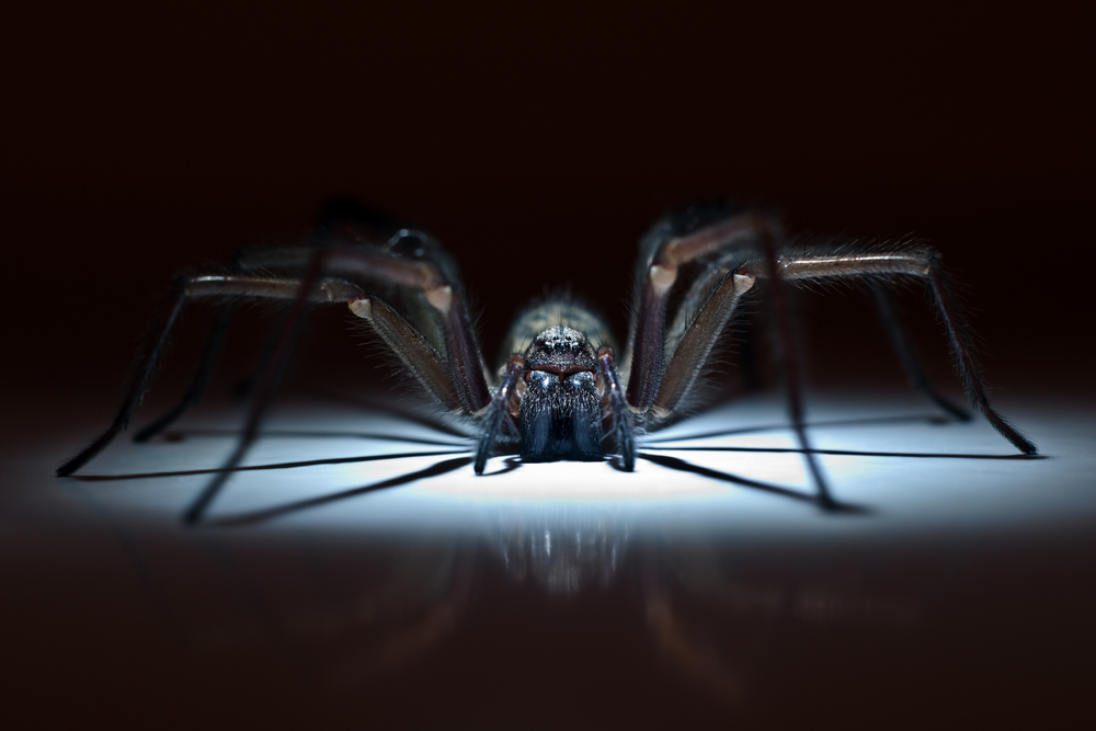 Pest Control For Spiders
