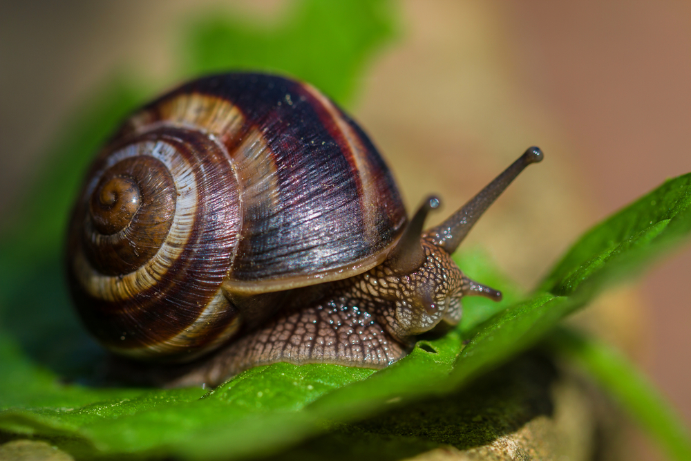 Pest of the Month: Slugs and Snails