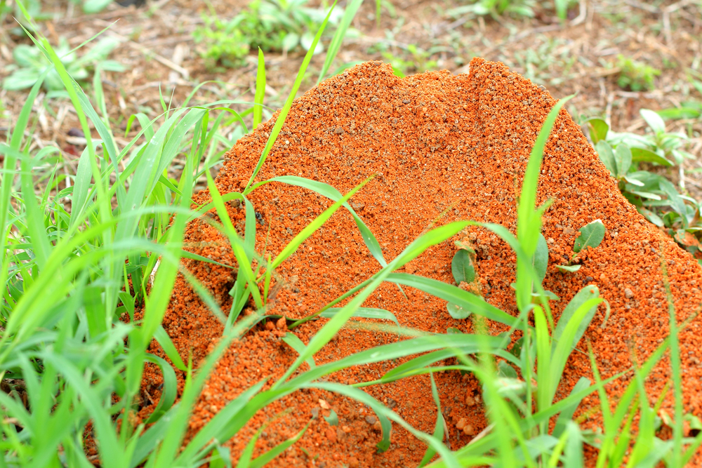 Ant Exterminator And Fire Ant Control