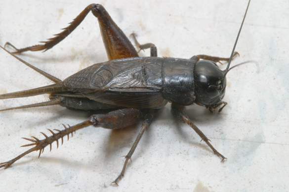 To get rid of crickets, call Buzz Kill Pest Control