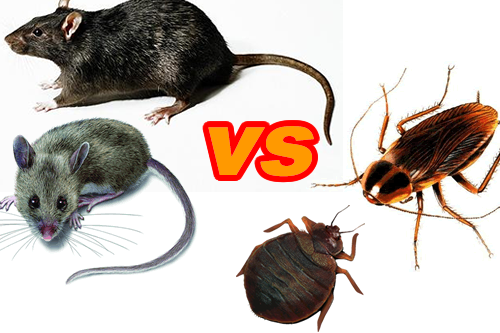 For a pest control near you, call Buzz Kill Pest Control