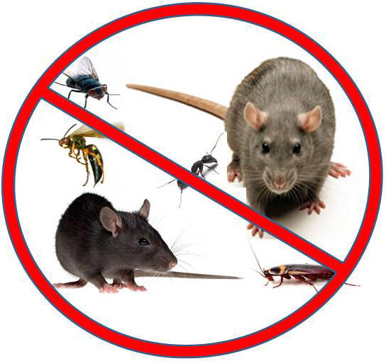 Call for roach and rodent control in the Dallas area