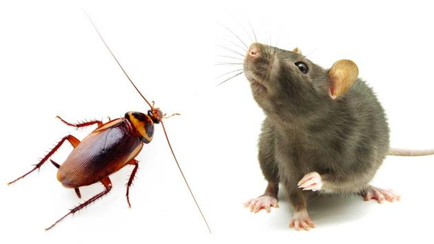 Pests of the New Year: Roaches AND Rodents?!?!