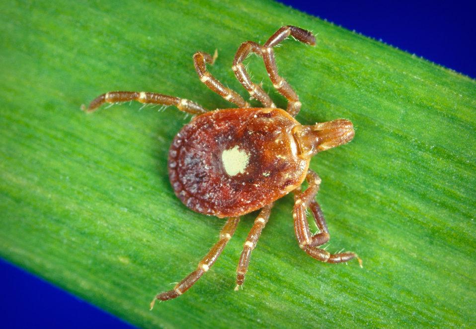 Tick & Flea Exterminator