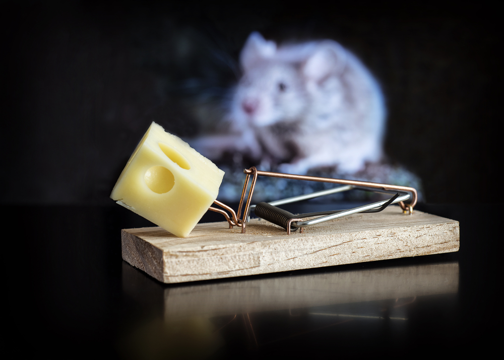 Mice control will eliminate unwanted mice