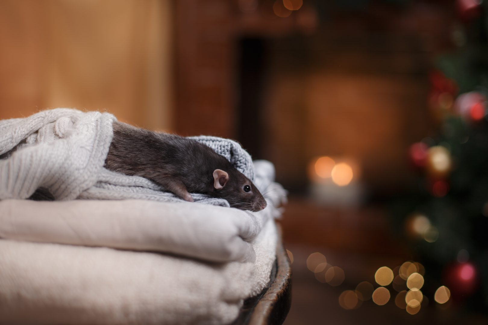Pest control is just as important in the cooler months as it is in Summer.
