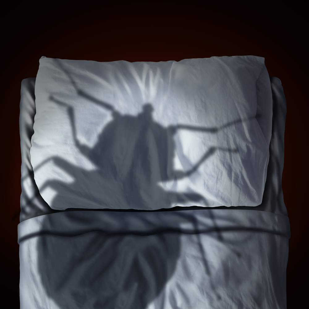 Signs That You Have Bed Bugs