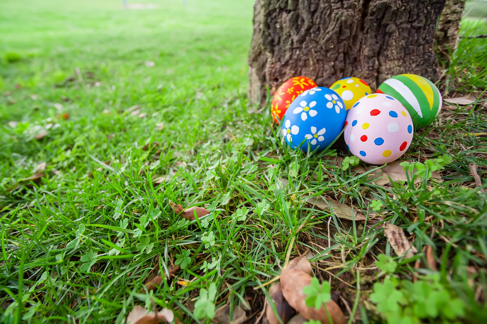 Home Pest control tips before Easter egg hunting