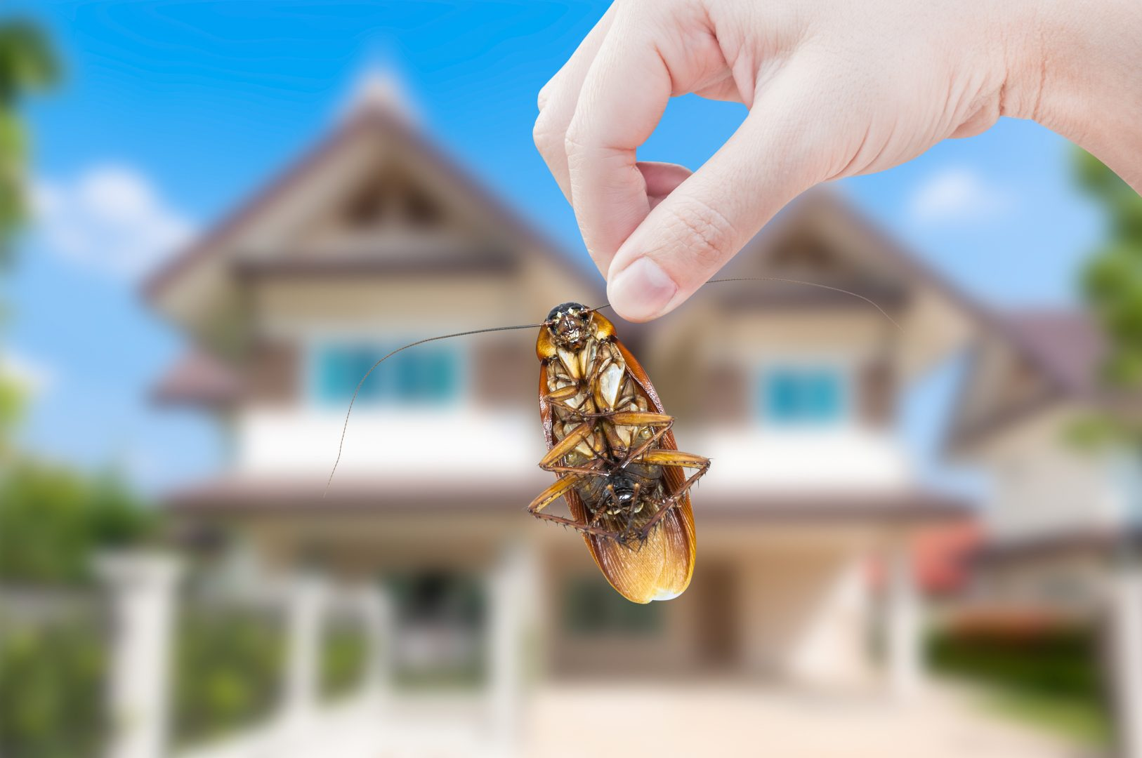 DIY Home Pest Control