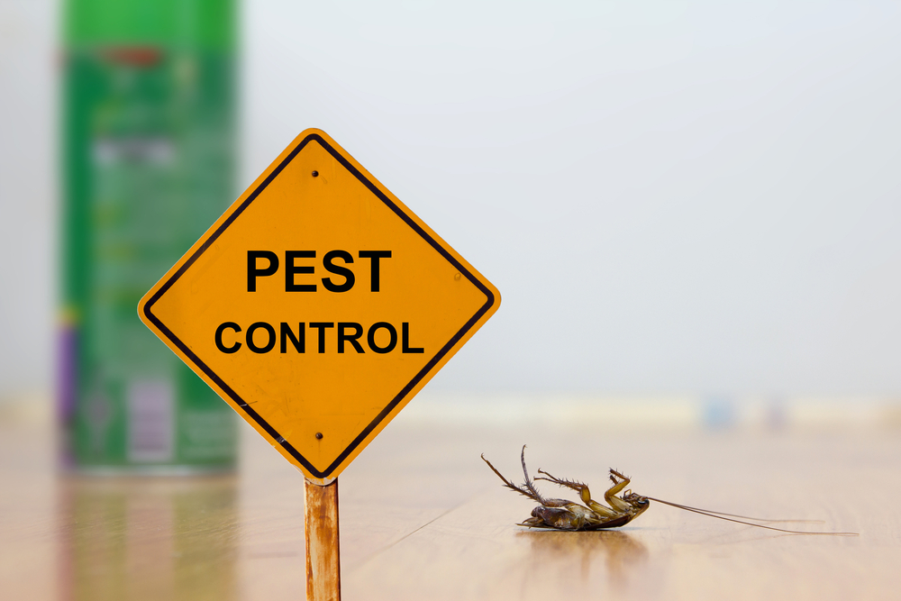 Home Pest Control Saves Summer in Dallas