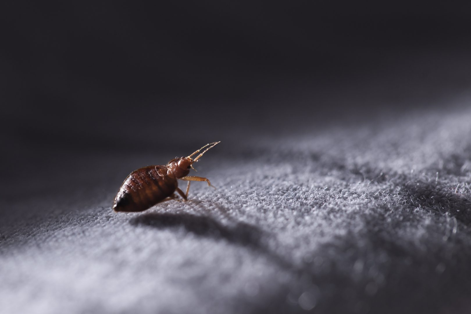 Bed bug extermination & Pest Control