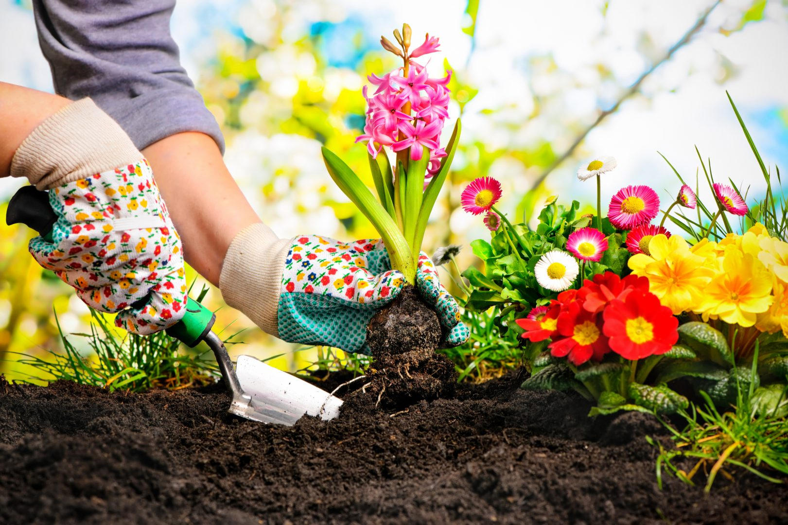 Pest Control For North Richland Hills Gardening