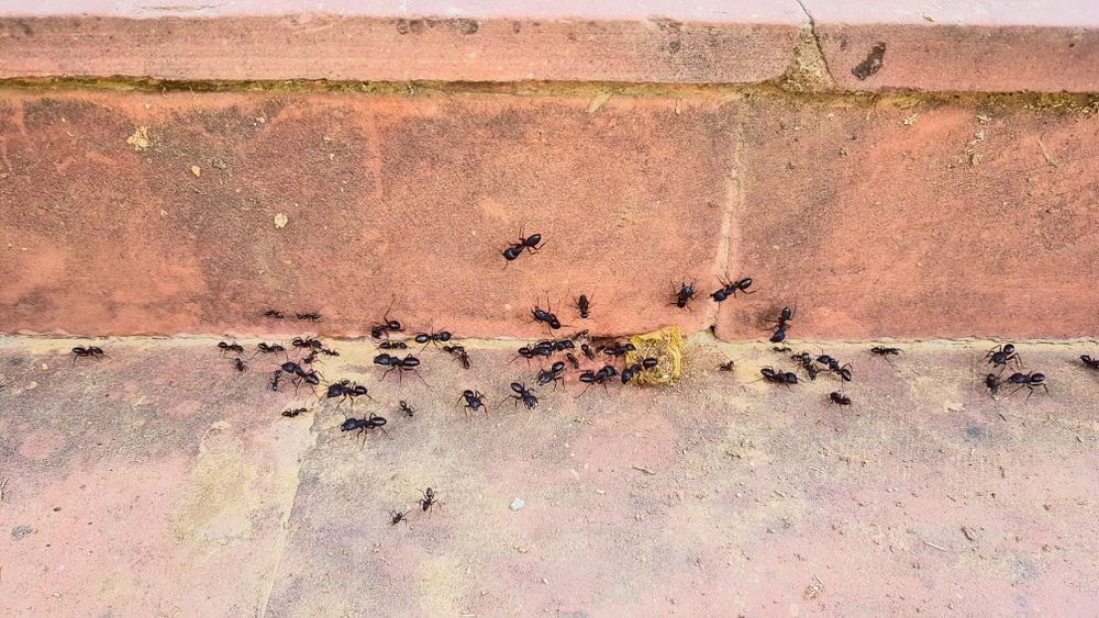 Summer Heat In North Texas Equals Insects In Your Home