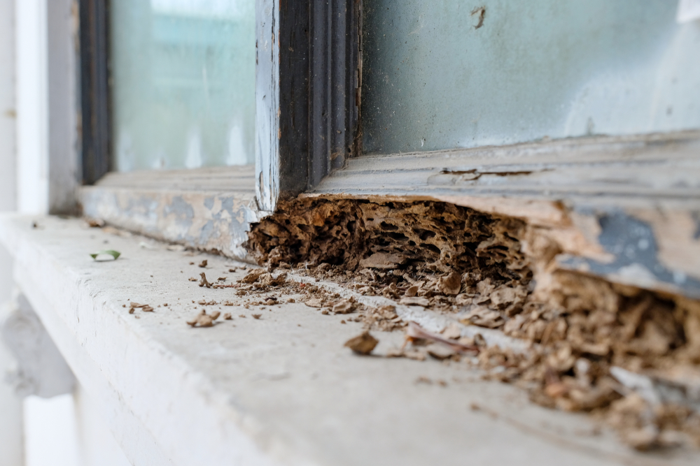 5 Signs That It's Time To Schedule Termite Control